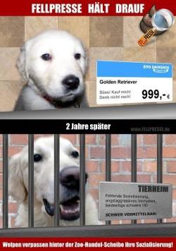 Lustige Spruche Hunde Lustige Hunde Videos Zum Totlachen 2018